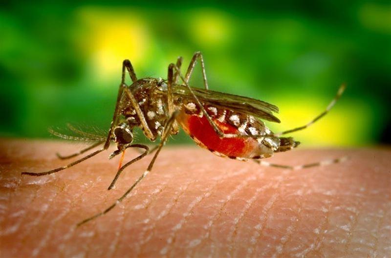 Infecciosas